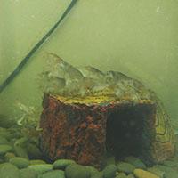 苏卡达陆龟多少钱[苏卡达陆龟的价格]