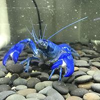 第五届广州国际水族展(GIAS2020) Guangzhou International Aquarium Show