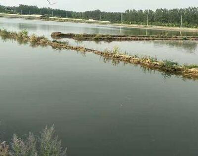 小龙虾池塘缺氧的原因和解决办法