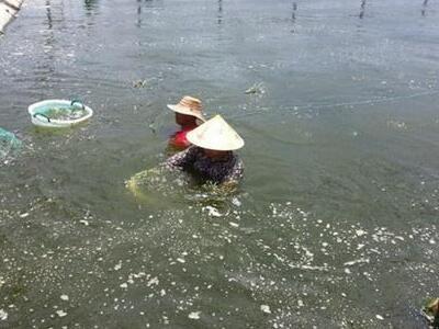 养殖小龙虾到底难在哪(两大难点)