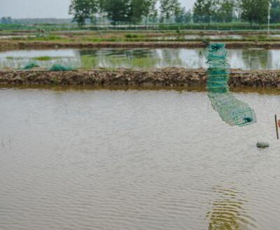 2020年小龙虾养殖前景分析