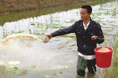 小龙虾养殖如何科学投喂饵料?