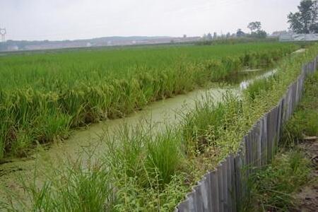 稻田小龙虾养殖图片