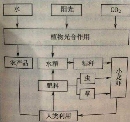 潜江稻田养殖小龙虾技术
