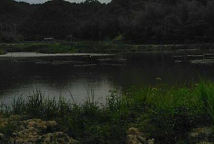 旧池塘改造养殖小龙虾池塘的五个步骤