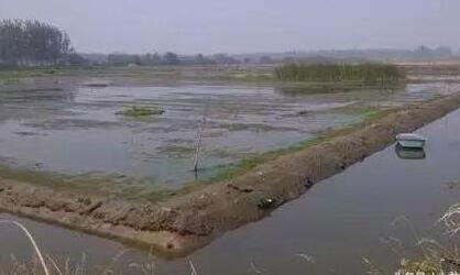 如何清理小龙虾养殖池塘