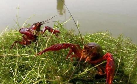 龙虾一般几月份开始上市?