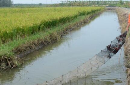 龙虾塘阴天能肥水吗?