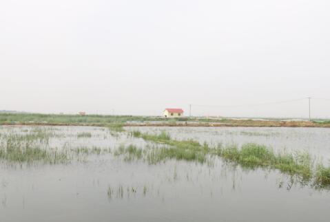 龙虾养殖加新水要注意什么?