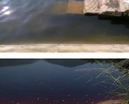 龙虾塘新肥好的水什么颜色?