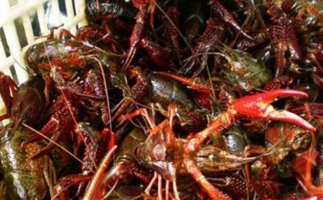 龙虾附近适合种植什么?