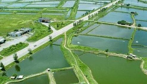 小龙虾养殖场要怎么建造?