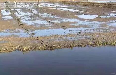龙虾田五月份水位保持多深好?