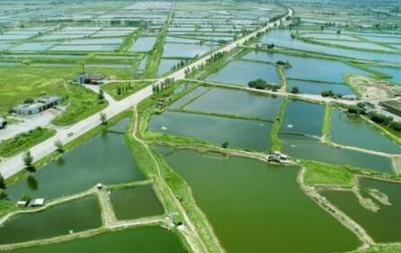 养殖龙虾的真实利润究竟有多少?