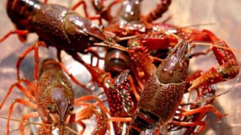 2020年小龙虾的价格会大幅上涨吗