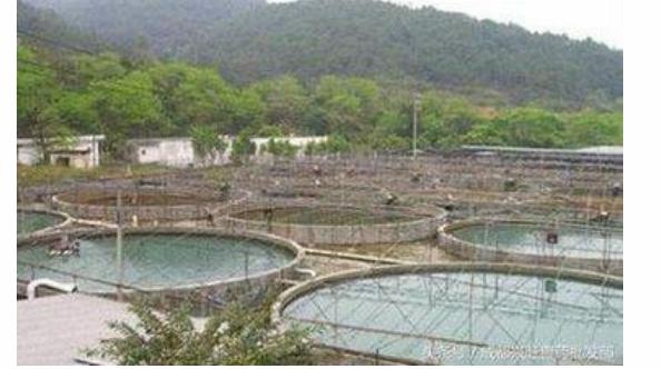 大棚建水泥池养小龙虾可以吗?
