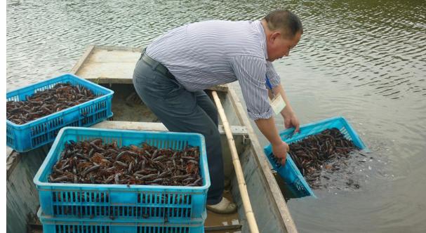 池塘养殖小龙虾水质如何管理?