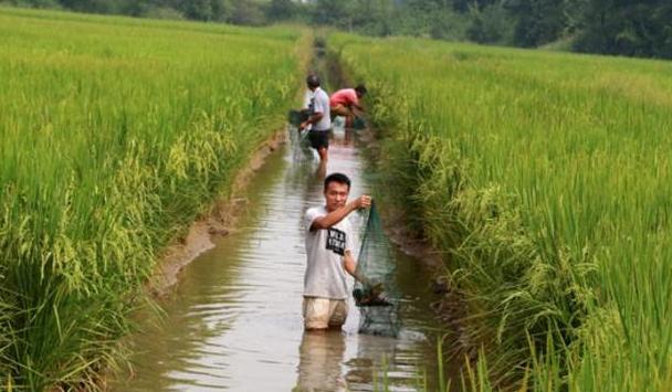 2020农村养殖小龙虾一亩田可赚多少钱 ?