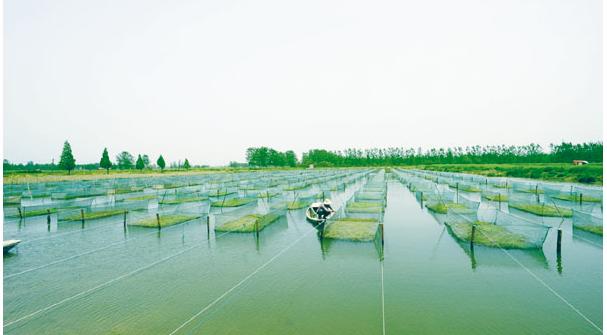养殖小龙虾投资成本要多少?