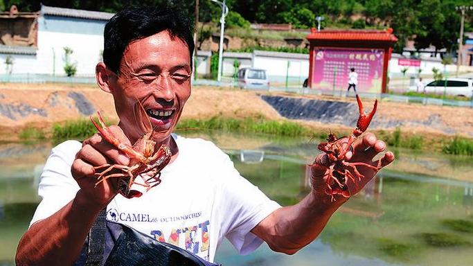养殖吃完小龙虾不能吃些什么呢?