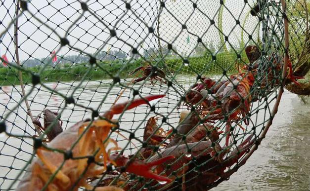 养殖小龙虾需要吃些东西什么才能长大呢?