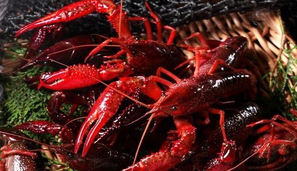 小龙虾稻田养殖的技巧方法有哪些呢?