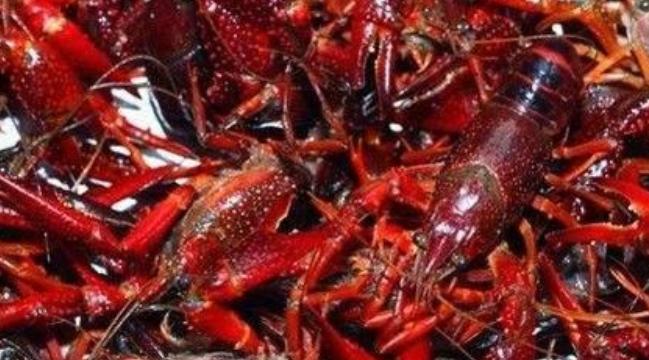 田间饲养小龙虾主要喂什么食物为主呢?
