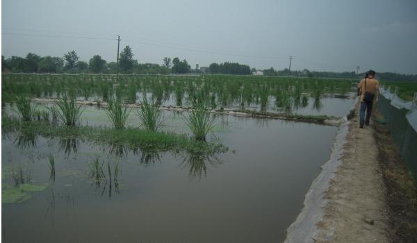 池塘养殖小龙虾养殖场地该如何建设?