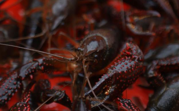 2020年养小龙虾国家有补贴吗?有多少?