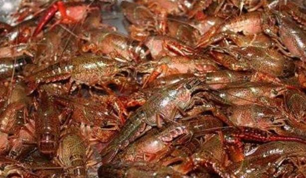 2020.6.14今日小龙虾价格多少 ?小龙虾成本费用要多少?