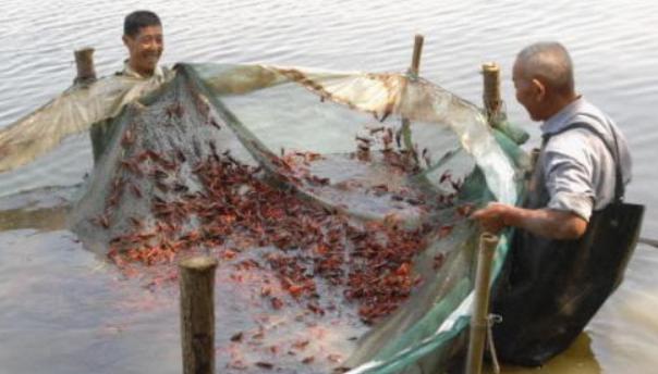 小龙虾前期养殖投入资金多少?