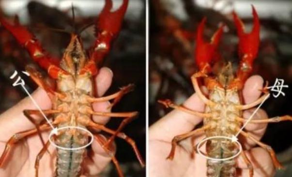 小龙虾的饲料价格多少钱一吨?