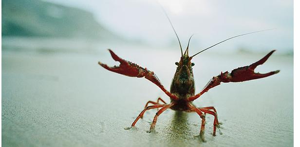 小龙虾的人工繁殖方式有哪几种?