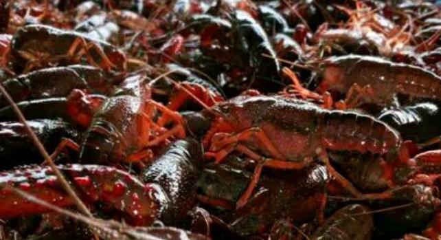 池塘养殖每亩小龙虾的成本费用有多少钱?