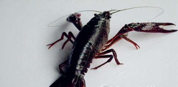 小龙虾养殖有补贴吗?
