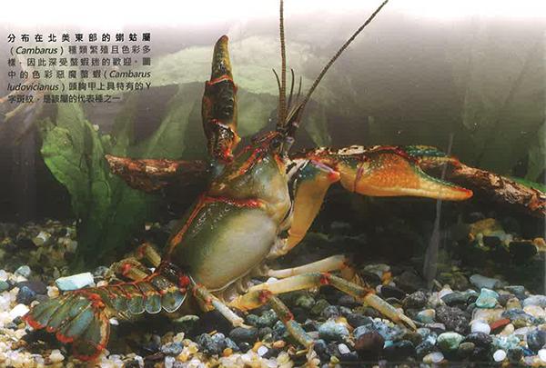淡水螯虾的分类及分布