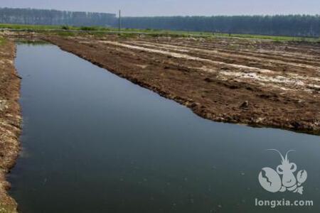 高温季节,如何管理好养殖塘口才能使小龙虾高产?