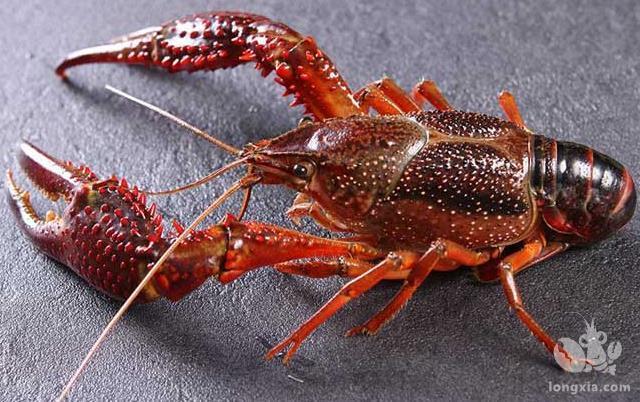 小龙虾怎么养殖,小龙虾的养殖方法