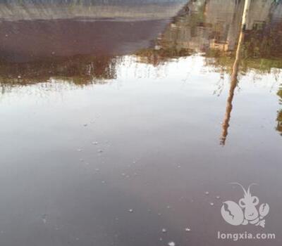 小龙虾养殖池塘的水发红怎么回事?