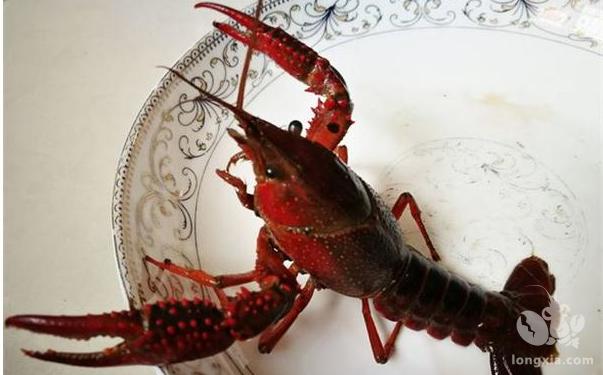 淡水小龙虾养殖技术要求有哪些?