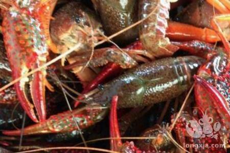 池塘养殖小龙虾怎样过冬