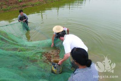 小龙虾养殖技术池塘的管理