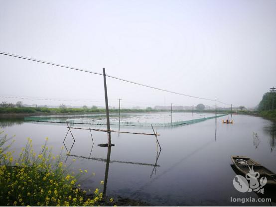 三种不同模式的小龙虾养殖水位管理小技巧(值得珍藏)