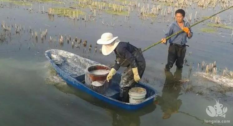 新挖的虾塘,种虾放下去一个星期全部死光了,这是什么原因?