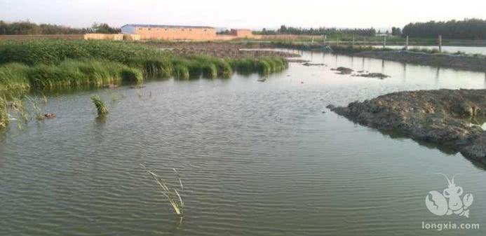 小龙虾养殖塘肥水要怎么做?虾塘肥水有妙招,其实肥水很简单!