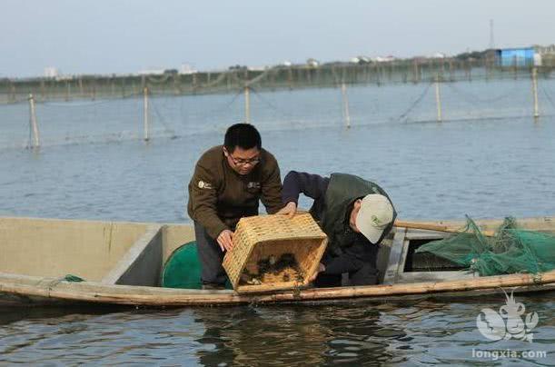 如何确保小龙虾能够安全过冬?