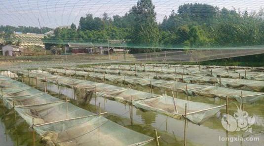 网箱养殖小龙虾的准备