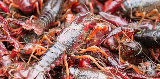 虾塘适合用菜籽饼肥水吗?