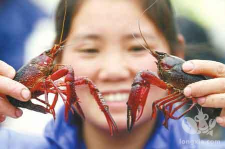 面对行情大跌,虾农们如何才能养出早出苗、早出虾,抢占市场?