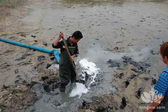 小龙虾池清杂鱼死鱼捞不干净如何处理?